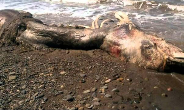 Carcaça do monstro marinho encontrado na Russia