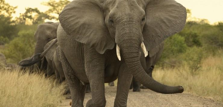 Uma mulher morreu pisoteada por um elefante durante uma selfie.