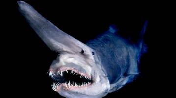 Estranha criatura marinha