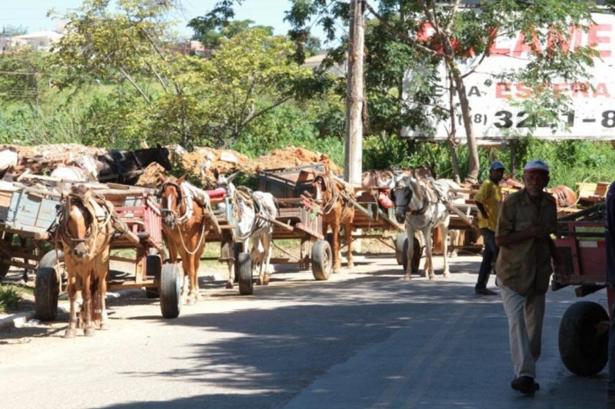 Já imaginou um transito de carroças?