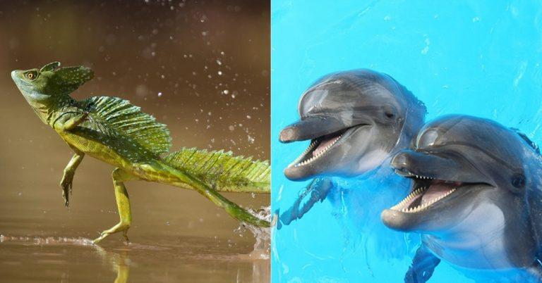 Esses 6 animais são capazes de andar sobre a água