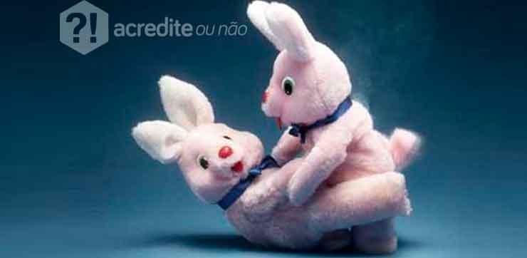 coelhos-fazendo-amor