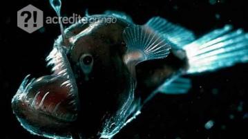 criatura-profundeza-oceano-mar-assustadora-peixe