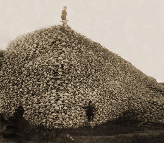 foto hitoria montanha cranio bisao animal