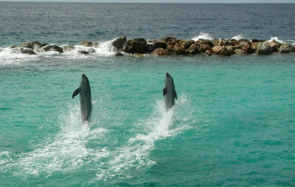 Acredite ou Não, até os Golfinhos andam sobre a água