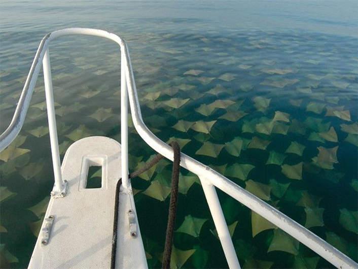 oceano mar arraias
