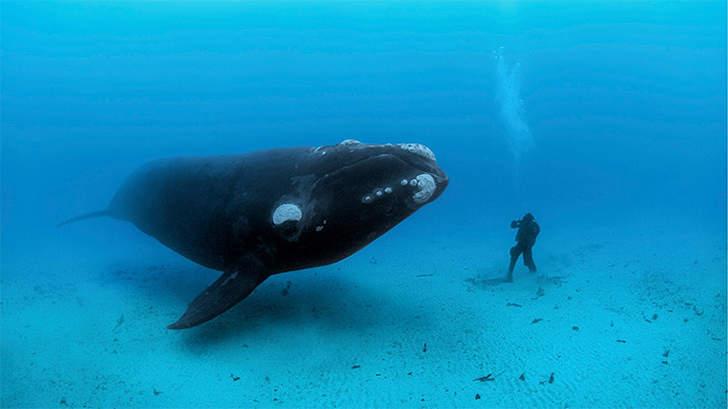oceano mar baleia assassina orca