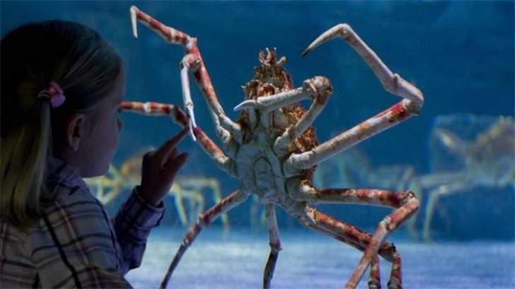oceano mar caranguejo aranha
