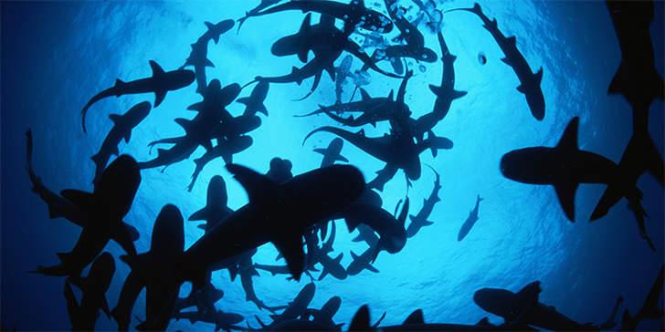 oceano mar dezenas tubaroes