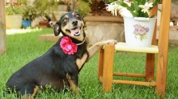 A cadela prenha Lilica (Foto: Ana Paula Grillo / Reprodução / YouTube)