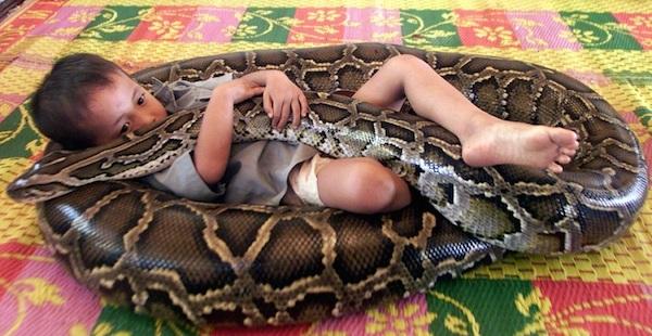 menino e cobra