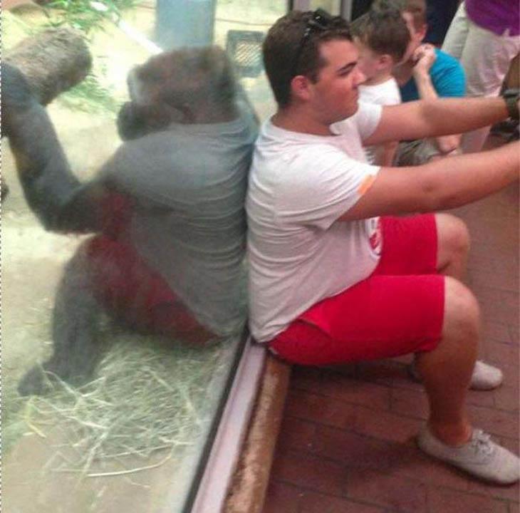 homem e gorila de costas