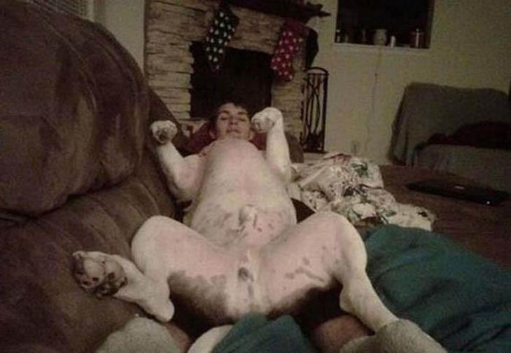 cabeça de quem cachorro homem sala