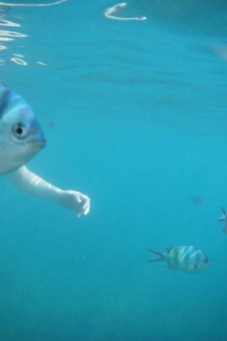 peixe braço