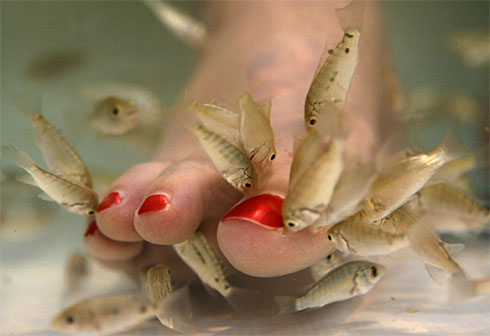spa tratamento pedicure mordida peixes