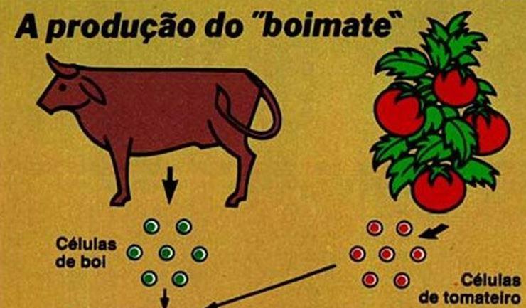 veja-boimate