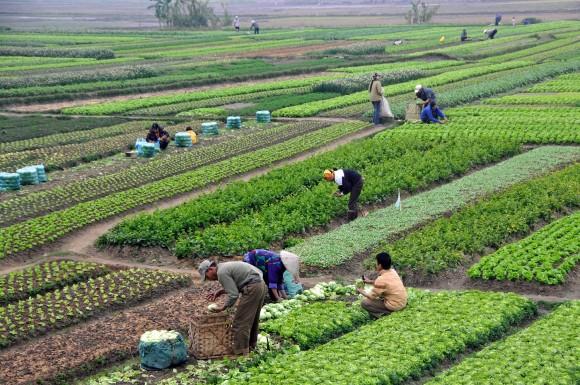 Atividades agrícolas contabilizam 24% da emissão dos gases do efeito estufa globalmente.