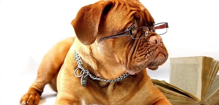 cachorros-inteligentes