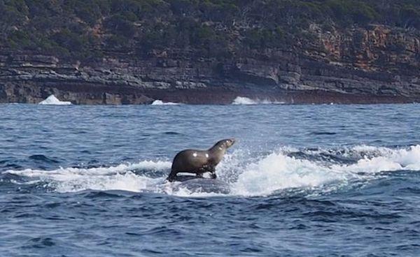 foca e baleia