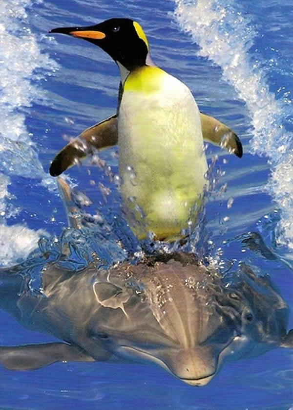 pinguim e golfinho