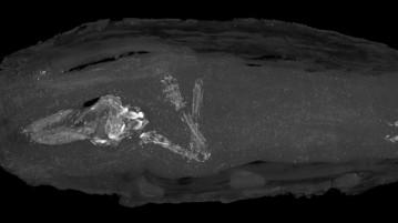 feto-múmia-egípcia
