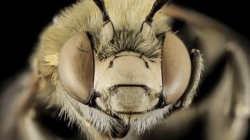 01-abelha-inseto