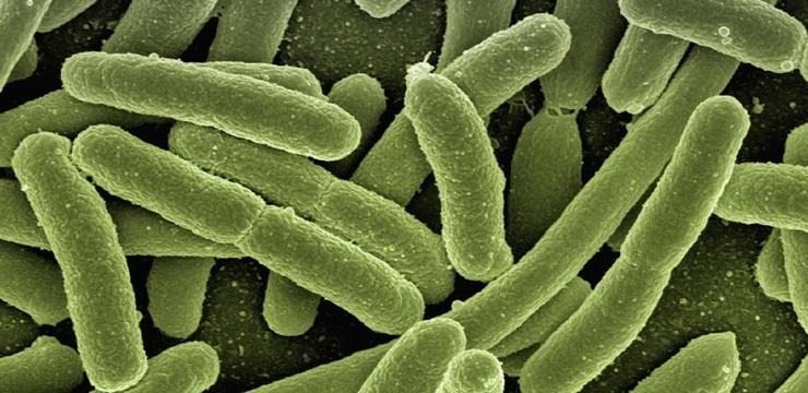 A bactéria E. coli