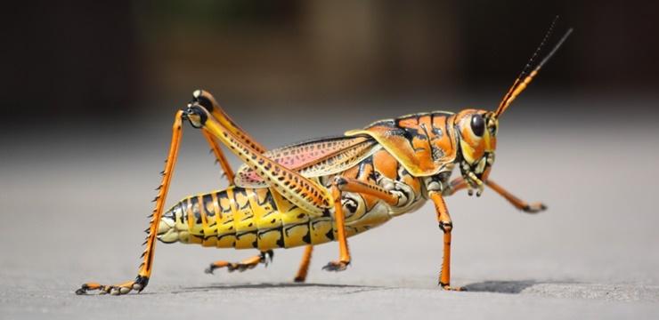 02-inseto