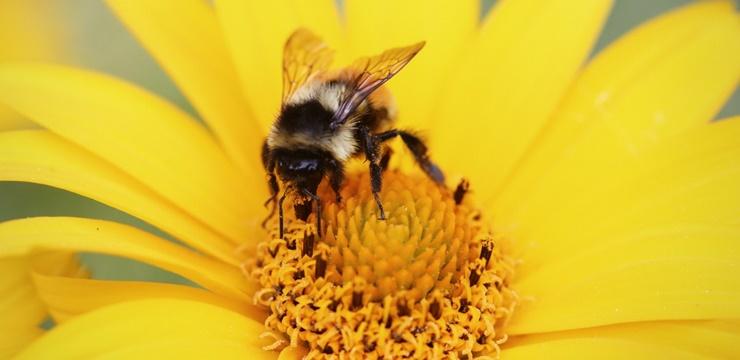 04-abelha-inseto