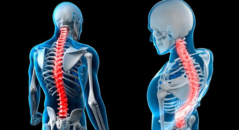coluna-vertebral