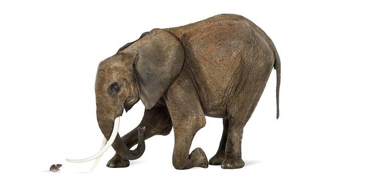 elefante-rato