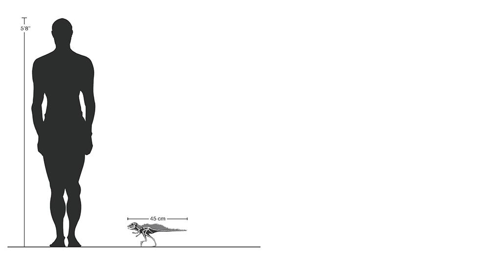 dinossauro-pequeno