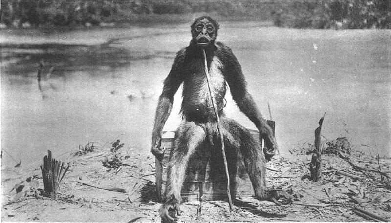 macaco-de-loys