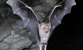 05-morcego