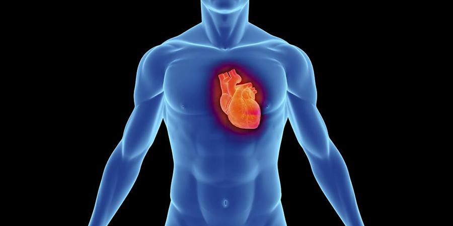 coração-3d