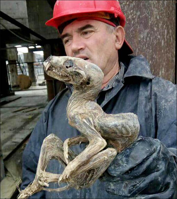 criatura-desconhecida-russia