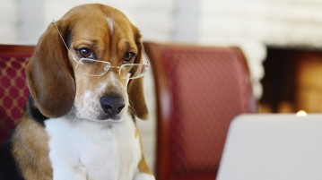 cao cachorro inteligente