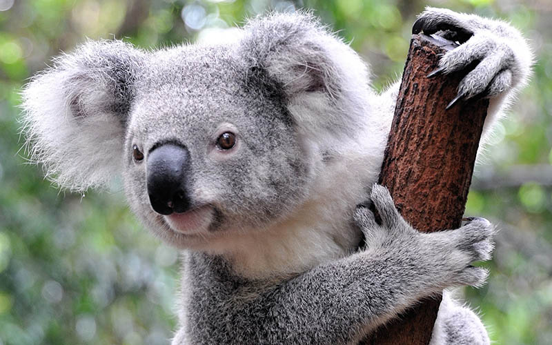 coala-dst