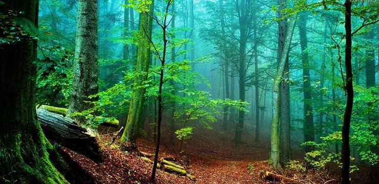 04-floresta