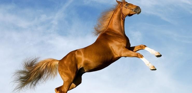 09-cavalo