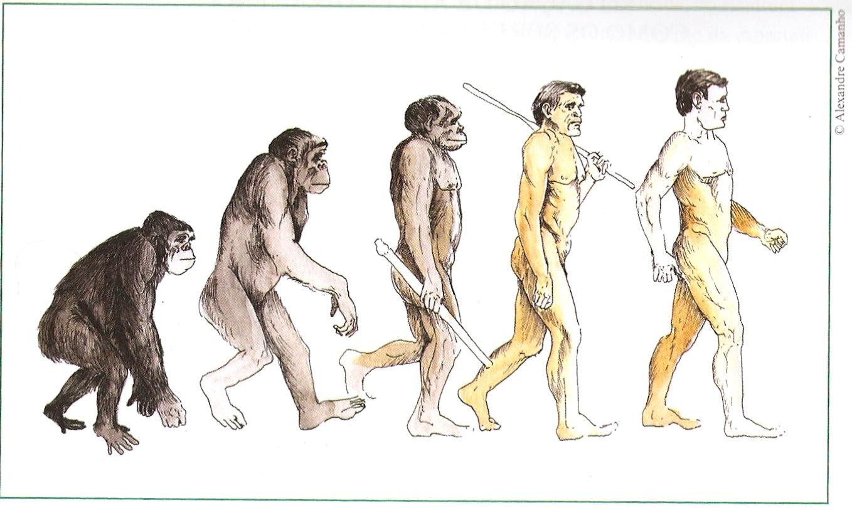 evolucao-humana