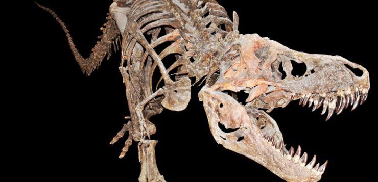 fossil-de-dinossauro-tiranossauro-rex