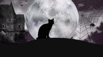 gato preto sexta-feira 13 halloween (je)