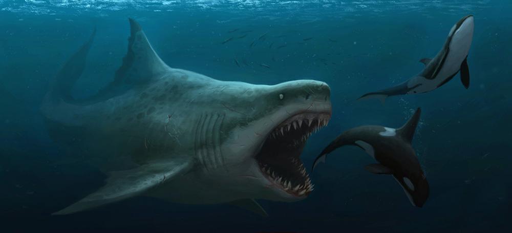 megalodon-baleias