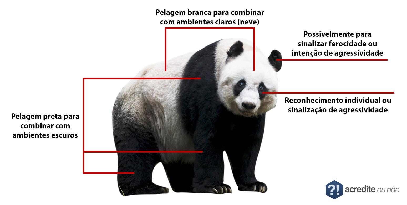 urso-panda-pelagem-acredite-ou-nao