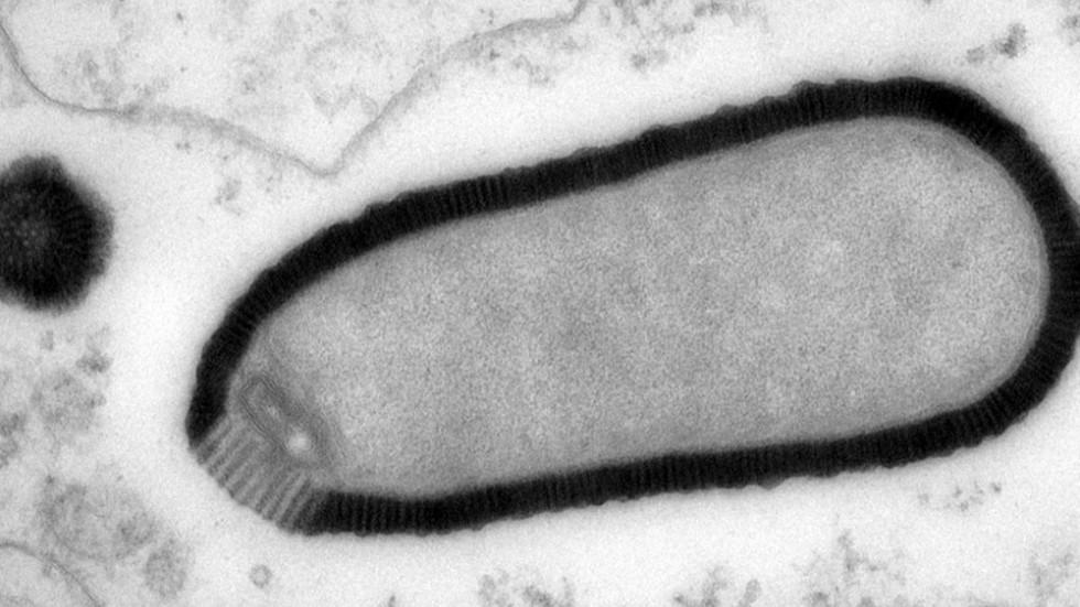Megavírus