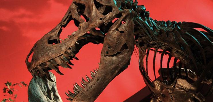 T-REX ossos dinossauros
