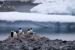 antartida pinguins