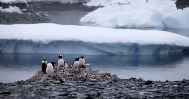 Oceano Antártico é oficializado como o quinto da Terra