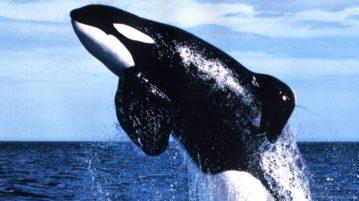 baleia baleias
